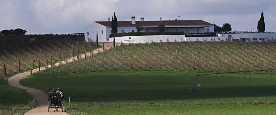 Herdade da Malhadinha em Beja  grape harvest programs in Portugal