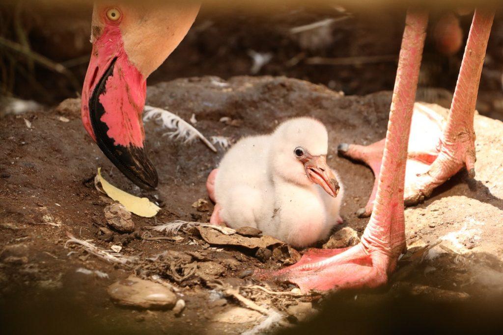 flamingo zoo da lourosa animais portugal