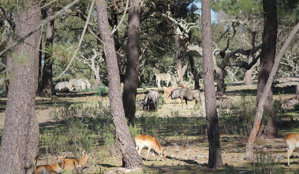 badoca safari park animais