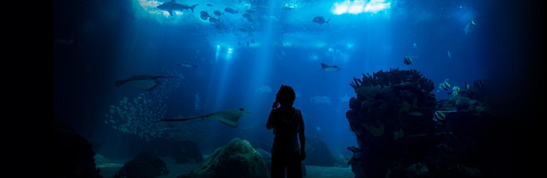 oceanario de lisboa experiences for animal lovers