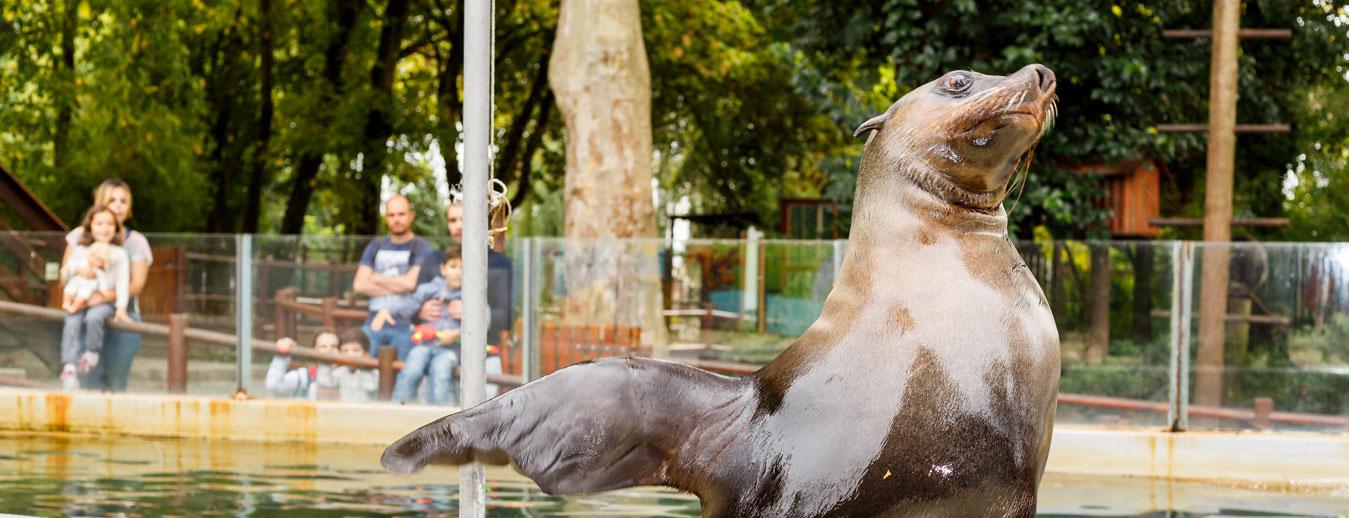 zoo da maia animais em portugal